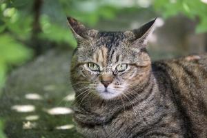 Nature Photography; Art; Urban Animal Life; Urban living; Cat; Germany; Bavaria