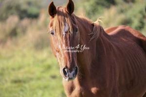 Nature Photography; Art; Urban Animal Life; Urban living; Horse; Normandy