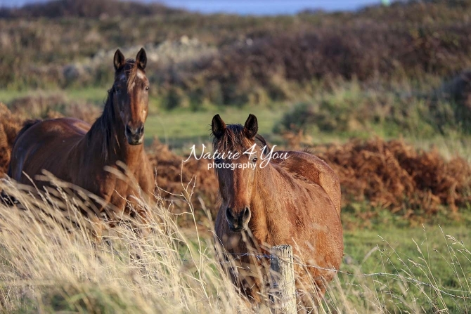 Nature Photography; Art; Urban Animal Life; Urban living; Horses; Normandy