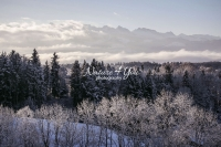 Nature Photography; Art; Landscape; Mountains; Rocks; Clouds; Fog, Switzerland; Zurich; Forest; trees coverd with snow; winter