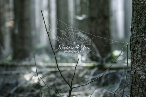 Spider web in a forest in Bavaria