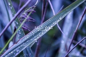 Waterdrops on grass - Bavaria