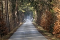 Country road surrounded by riparian vegetation with a light veil of fog in Bavaria